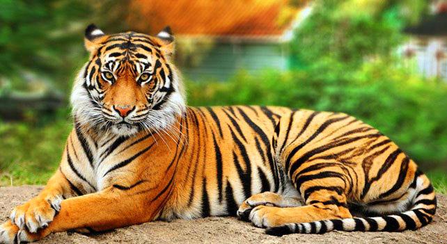 Amazoncom Wonder Pets Save the Bengal Tiger Sofie